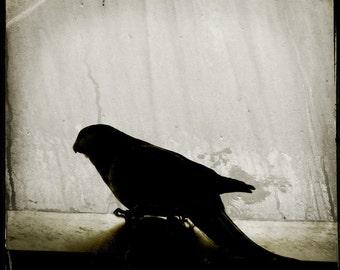 Bird Silhouette Photograph--Bird Silhouette II--TTV Fine Art