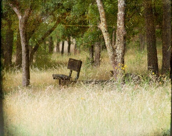 Yellow Green Grass Bench Photograph--Lonely Bench--Fine Art