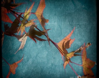 Blue Autumn Leaves Photograph--Fall Leaves Cascade--TTV Fine Art