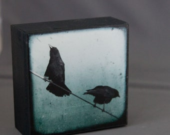 Blue Crows 4x4 Photograph on Wood Panel--Morning Chatter III--Fine Art