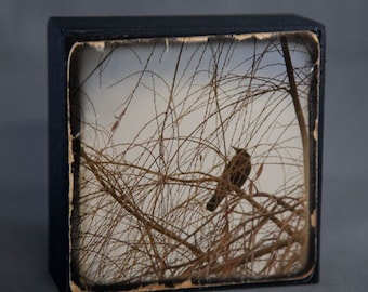 Blue Brown Crow 4x4 Photograph on Wood Panel--Crow in Brambles--Fine Art