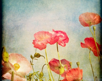 Blue Red Pink Flower Photograph--Painterly Poppies--Fine Art