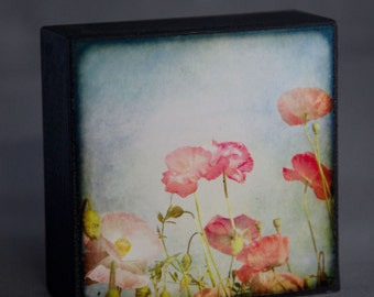 Blue Red Pink Flower 4x4 Photograph on Wood--Painterly Poppies--Fine Art