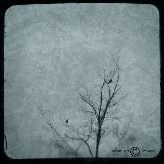 Blue Crows Tree Photograph--2 Crows in Tree--TTV Fine Art
