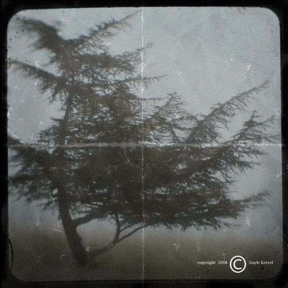 Muted Green Blue Pine Tree Photograph--Lone Pine in Fog--TTV Fine Art