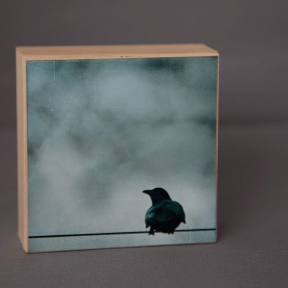 Blue Crow Photograph on Wood Panel--Looking for Answers--4x4 Fine Art