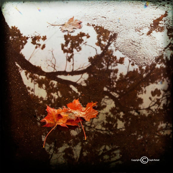Red brown Leaves Reflection Photograph--Autumn Reflections--Fine Art