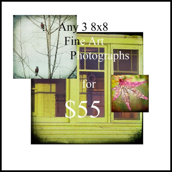SALE--Any 3 8x8 Fine Art Photographs for 55 USD