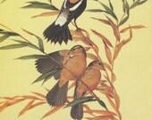 Vintage Bird Print - Bobolink - Menaboni Book Plate