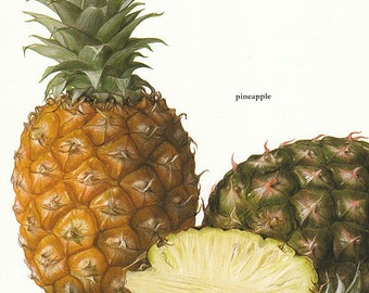Set of 2 Vintage Fruit Illustrated Prints Pineapples Coconuts 1970s Color Book Pages