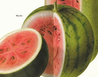 Set of 2 Vintage Illustrated Fruit Prints Melons 1970s Book Plate Pages Watermelon Cantaloupe