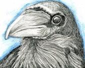 Raven Crow Print from Drawing Bird Wildlife Art-Carla Smale