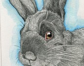 Rabbit Bunny  Original Drawing Pencil Wildlife Art-Carla Smale