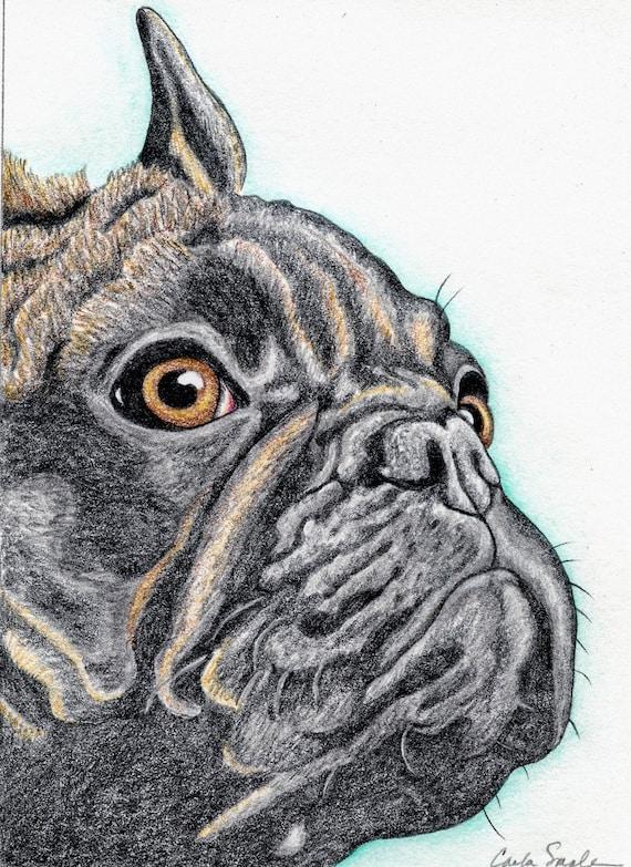 French Bulldog Original Pencil Drawing Dog Art-Carla Smale