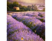 Lavender No. 4, Original, Signed, Fine Art Photograph matted to 11x14