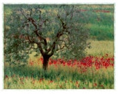 Olive and Poppies, Signed, Original Fine Art Print  matted to 11x14