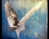 Owl Flutter, 5x5 Original, Signed, Fine Art Photograph