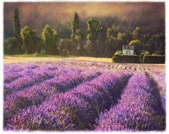 Lavender no. 5, Original, Signed Fine Art Print matted to 11x14
