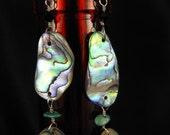 shimmering shells