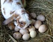 Organic Egg Gourds - Grow a Gourd Garden