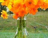 Orange Cosmos - Whimscal Heirloom Flower Seeds - Organic Garden Seeds