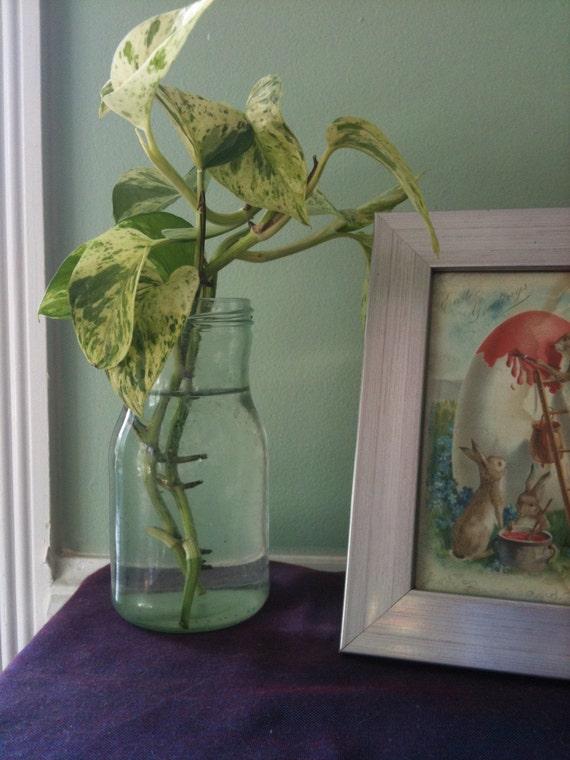 pothos plant care instructions