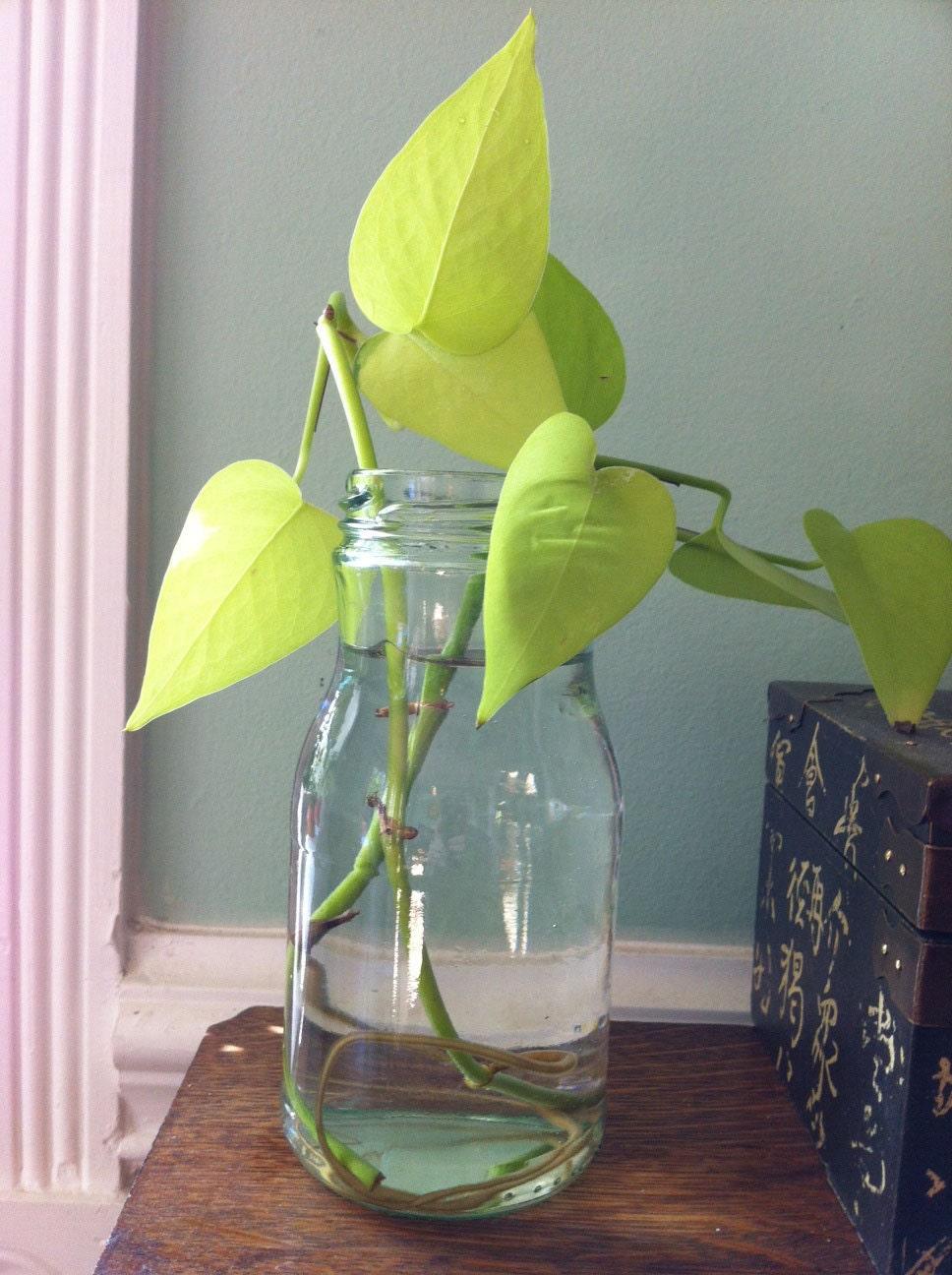 Plant In Glass Vase