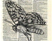 BUTTERFLY....  print of an original pencil and pen ANATOMICAL ILLUSTRATION ON AN OLD DICTIONARY PAGE