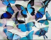 12 x Mixed Blue 3D Transparent Butterflies