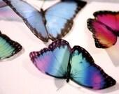 B021 - 12 x 3D Morpho Butterflies