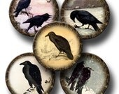 Crows Ravens Black Birds- 2.5 inch Primitive Vintage Art Circles- Printable Collage Sheet Download JPG Digital File-Buy ONe Get ONe FREE