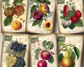 FRUIT-Grapes, Strawberries, Plums, Apples -CHaRMiNG Vintage Art Tags Cards Labels- Printable Collage Sheet JPG Digital File-Buy 1 Get 1 FREE