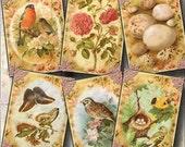 BiRDS, BuTTERFLIES, FLoWERS, BiRD EgGS - Vintage Art Tags/Cards-craft supplies-Printable Collage Sheet JPG Digital File-BUy ONe GEt ONe FREE