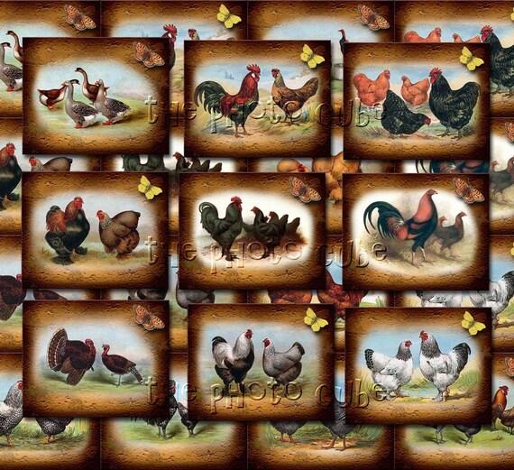 ChiCKeNS, RooSTeRS, TuRKeYS & GeeSe- Barnyard FoWL-Mini Tags/Cards/Labels -Printable Collage Sheet JPG Digital File- BuY OnE GeT OnE FREE