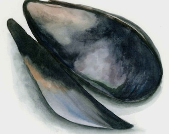 8x10 watercolor mussel print