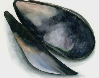 8x10 watercolor mussel print