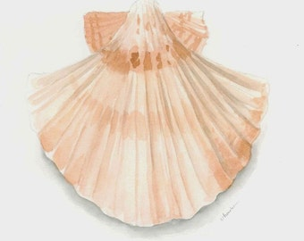 Scallop shell 8x10 watercolor print with white mat