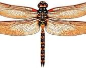 5 x 3D Dragonflies - DESERT DUST Sand, Orange - Dragonfly, Bathroom, Bedroom, Mirror, Wall Art, Decoration, Tiles, Gift, Kids Room, Baby