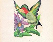 Hummingbird, Spoonbill 1912 Antique Bird Children Book Plate 2 Sided