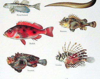 Rice Eel, Redfish, Lionfish, Stonefish 1984 Vintage Fish Book Plate Colored
