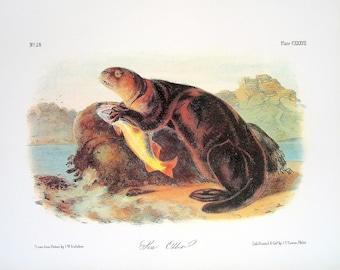 Sea Otter 1989 Vintage Audubon Book Plate Page for Framing Naturalist Illustration