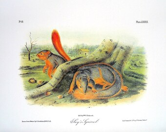 Say's Squirrel 1989 Vintage Audubon Book Plate Page for Framing Naturalist Illustration