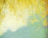 Shabby Chic Decor Nature Photograph Yellow Willow Branches with Blue Sky and White Clouds 5x5 Inch Fine Art Photography Print Willow