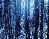 Frozen Landscape, Winter Photography, Blue Photo, Nature Picture, Christmas Home Decor, Blue, Snow, Woodland - 5x7 inch Print, Wonderland