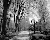 Penn State Picture - Penn State Photography, Landscape Photograph - 5x7 inch Black and White Photo, Timeless