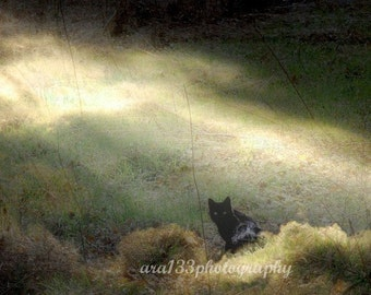 Animal Theme Decor, Spooky Black Cat Photography, Animal Photo, Black, Surreal, Olive Green, Nature Picture- 8x8 inch Print -Bewitched