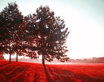 Landscape Photography, Nature Photograph, Red Picture, Autumn, Fall, Trees - 5x7 inch Print -Awake