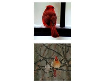 Cardinal Photography Prints, Animal Pictures,  Bird Photos, Nature,  - Two 4x4 inch Fine Art Prints