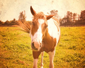 CLEARANCE Southwestern, Horse Photo, Animal Photography, Wall Decor, Rustic Picture, Yellow, Orange, Brown - 5x7 inch Horse Photo