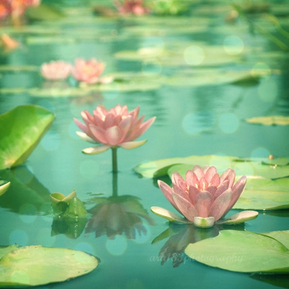 50% OFF SALE Floral, Nature Photography Pink Flowers Lotus Picture Pink Aqua Teal Blue Waterlillies - Floral 8x8 inch Print - Dancing in Sti